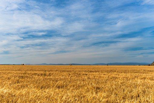 В Курской области ввели в оборот две тысячи га выявленных бесхозных селхозземель