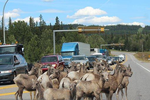 Anticipate roadblocks