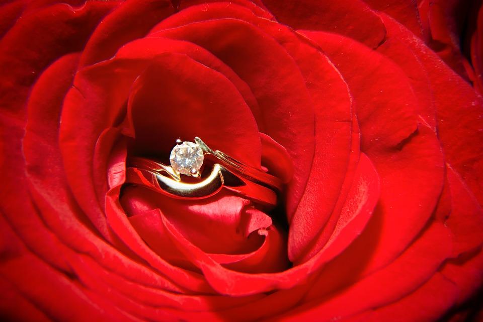 73+ Gambar Bunga Mawar Dan Cincin Paling Keren