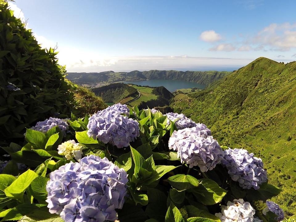Paysage Lac Fleur Photo Gratuite Sur Pixabay