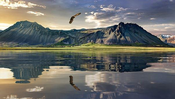 New Zealand, Landscape, Eagle, Bird