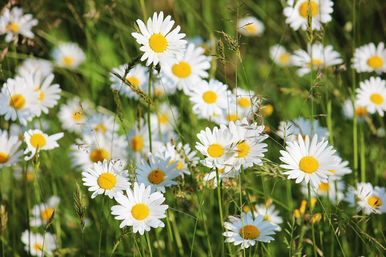 Открытка луговые цветы, открытку напечатать