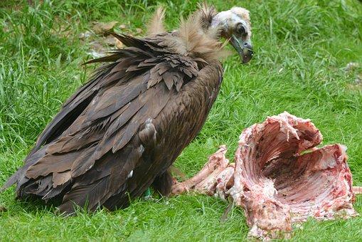 zadarmo monštrum vtáky je vid