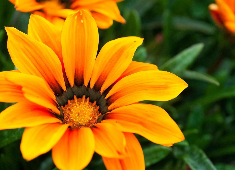Flower orange yellow free photo on pixabay flower orange yellow pretty outdoors petal mightylinksfo