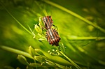 insect, beetle
