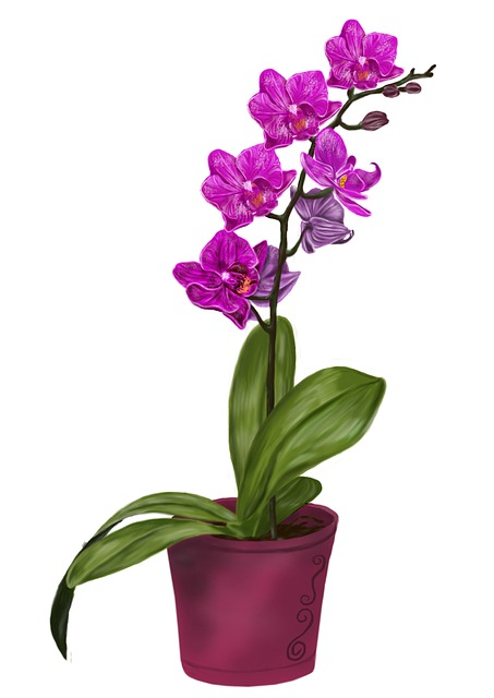 Free Illustration Orchid Flower Violet Drawing Free