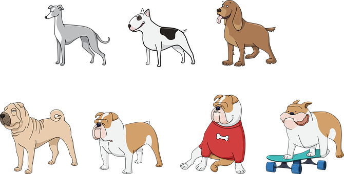 Dog, Animals, Pet, Bull Terrier, Bulldog