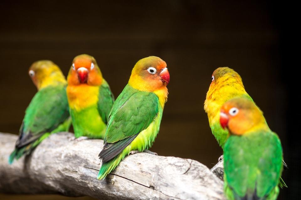 Love Birds Colour · Free photo on Pixabay
