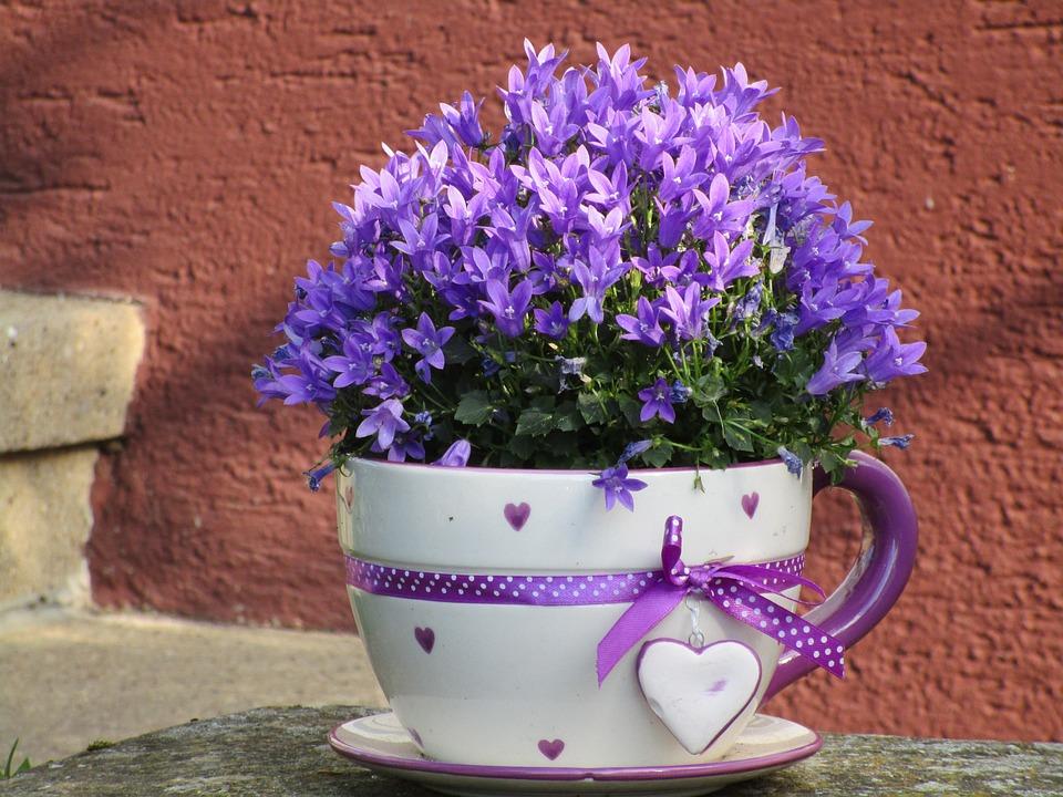 Kostenloses foto blumentopf tasse blumen lila for Blumentopf dekoration