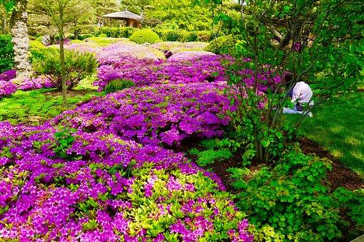 Chicago Botanischer Garten Fotos Kostenlose Bilder