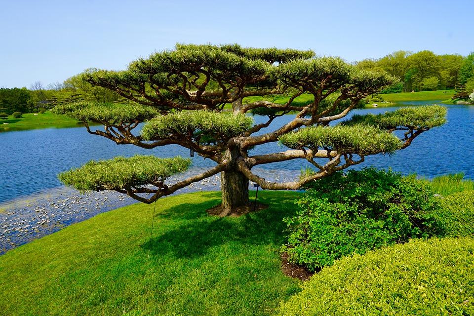 Arbre Jardin Japonais Paysage Photo Gratuite Sur Pixabay