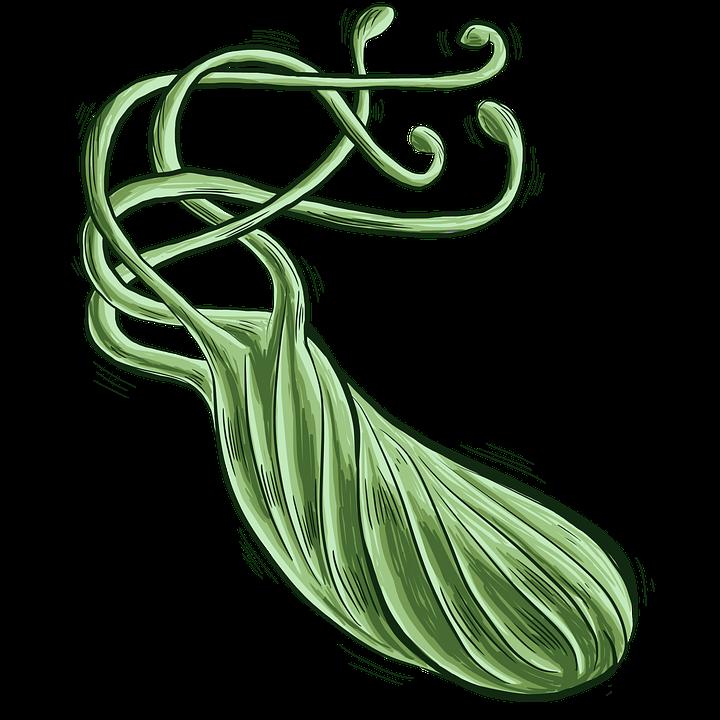 Free Illustration Bacteria Bacterium Free Image On