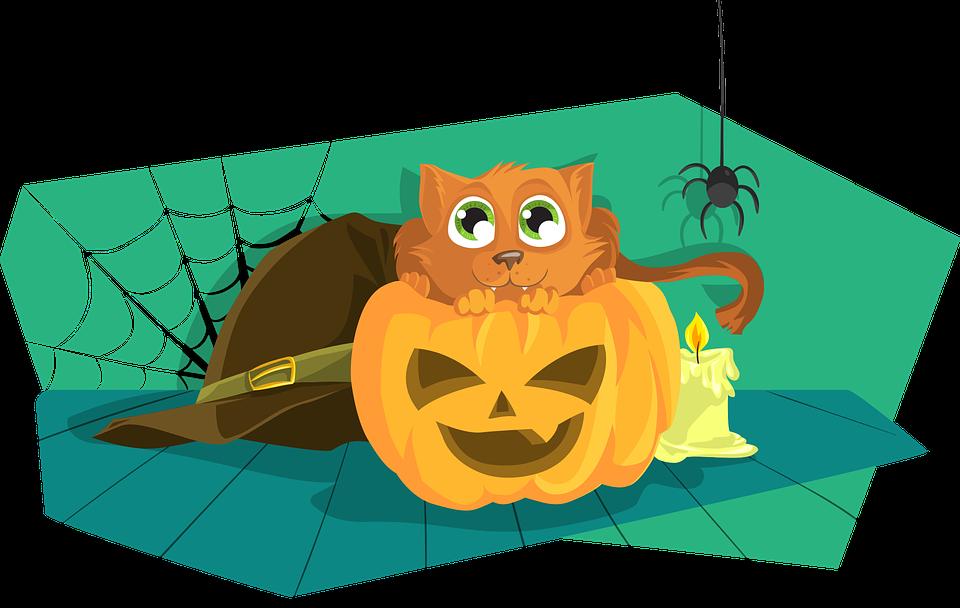 Cat, Citrouille, Halloween, Angoissant, Effrayant