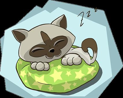 Chaton, Kitty, Cat, Dormir, Sommeil, Zzz