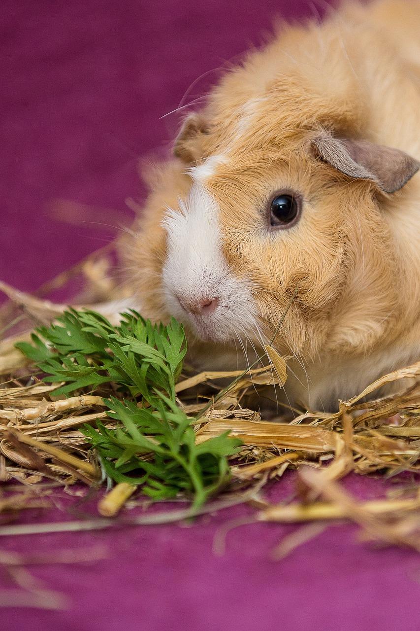 интересные фото домашних животных компания предлагает срочный