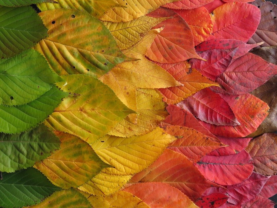 autumn trees colorful leaves - photo #35
