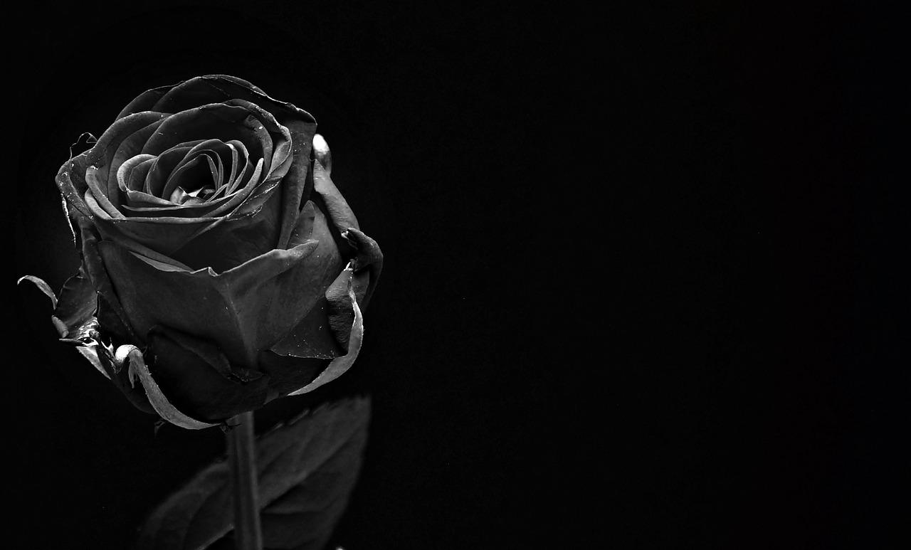 rose-1460773_1280.jpg