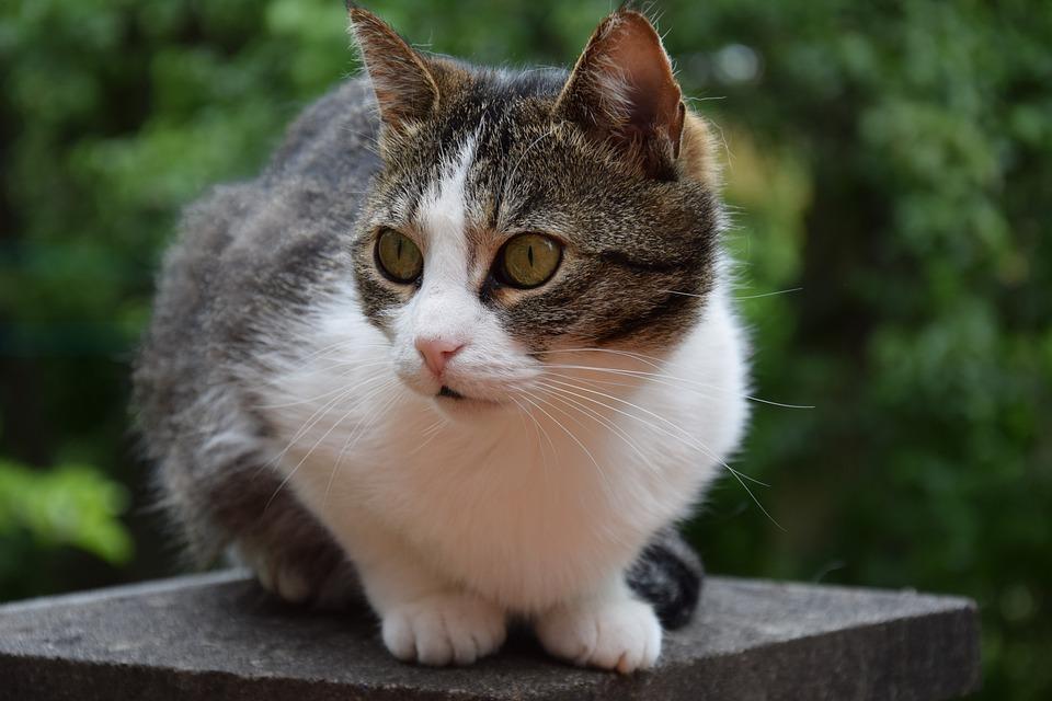 картинка домашнего животного кошка фото для