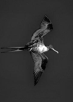 70+ Free Bermuda & Ocean Images - Pixabay