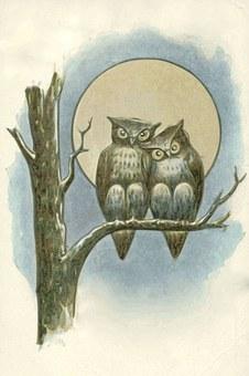 Eulen, Nacht, Mond, Vollmond, Nocturne