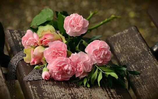 Rose, Rose Rosa, Fiori, Fiori Rosa