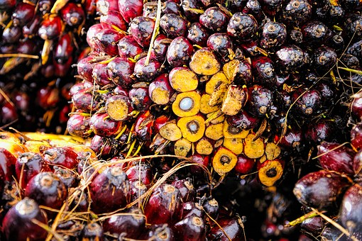 Palm Oil Fruit Background Ripe Red Produce
