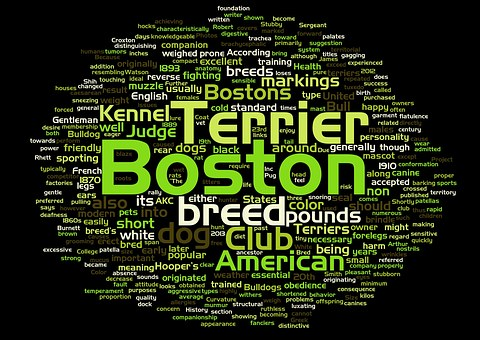 Boston, Terrier, Dog, Word Cloud