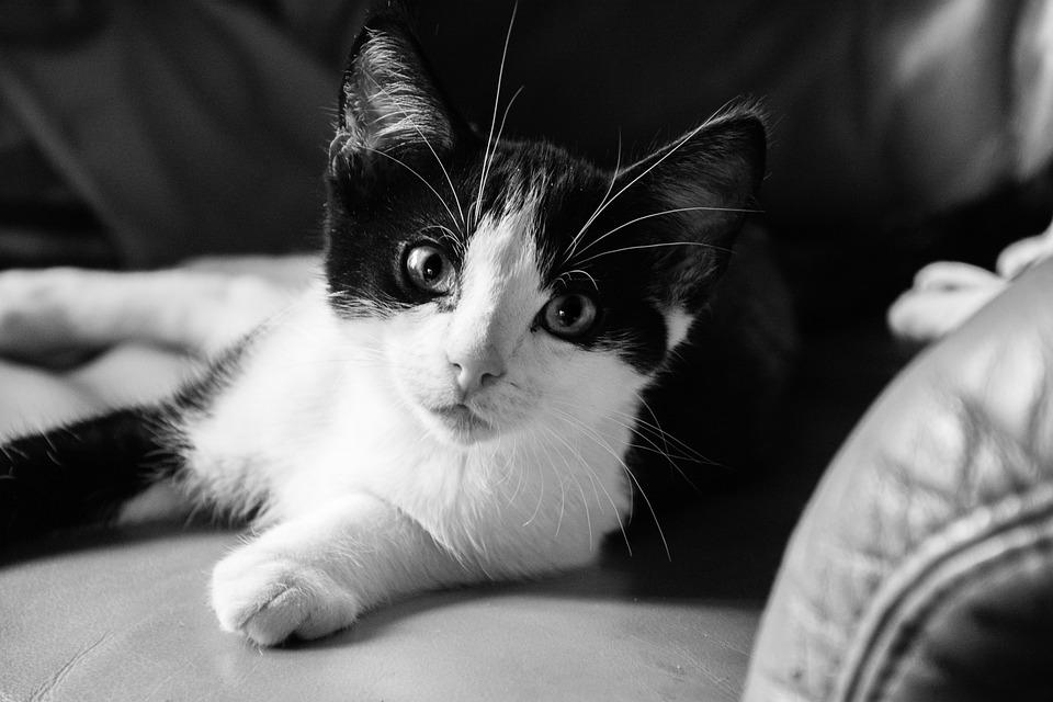 6aefcfb28895 Γάτα Γατάκι Ζώο Κατοικίδιο - Δωρεάν φωτογραφία στο Pixabay