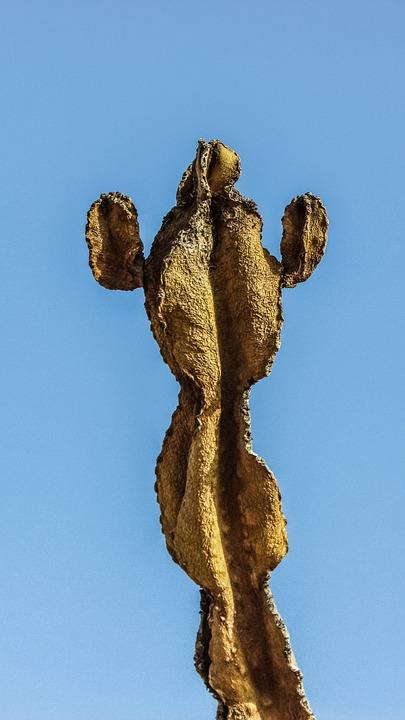 сухой кактус
