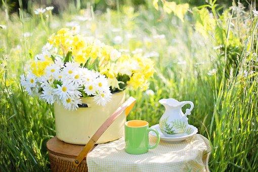 Hoa Cúc, Mùa Hè, Hoa, Thiên Nhiên