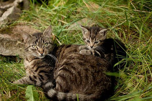 Cats, Animals, Nature, Sweet, Kittens