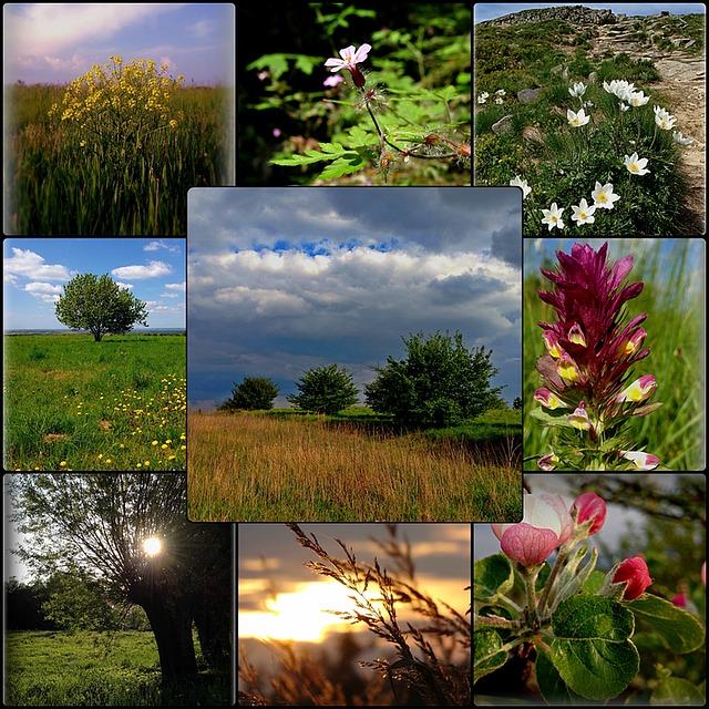 Разнообразие растений в природе картинки