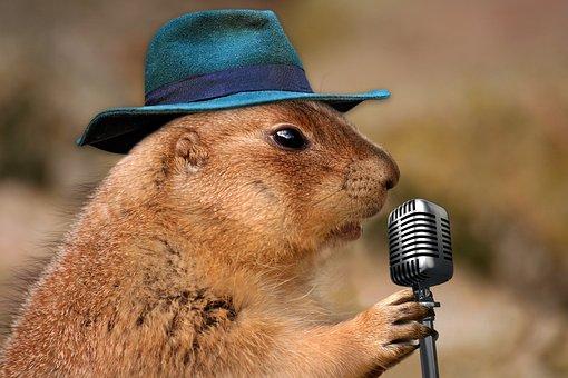 プレーリードッグ, 歌, 音楽のげっ歯類, 自然, 動物, ブラウン, 歌手