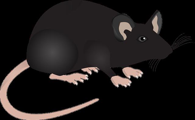 実験用マウス マ...