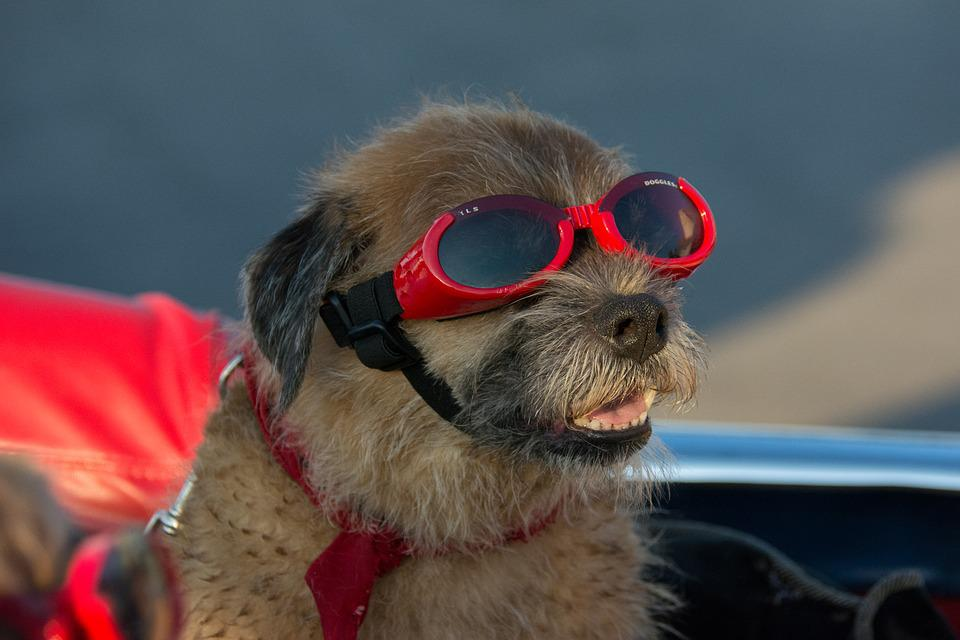 Goggles Dog Canine Pet Vacation Funny Terrier