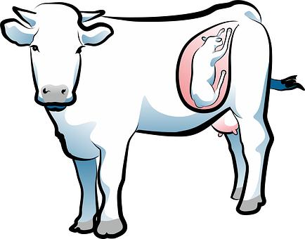 出産, 牛, 動物, 子牛の肉, 農場の動物