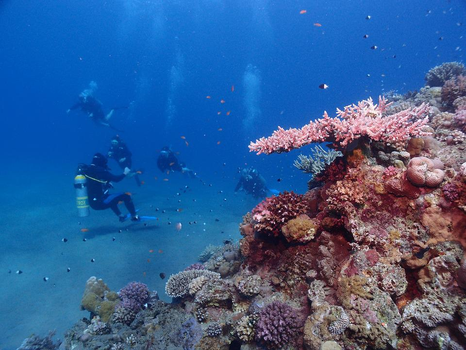 free photo  egypt  diving  red sea  underwater - free image on pixabay