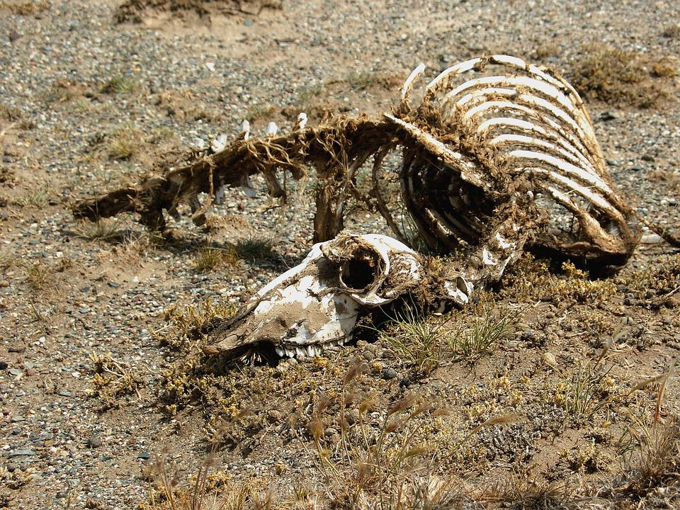 carcass-1474290_960_720.jpg