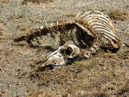 Carcass, Skeleton, Animal, Desert, Nimal