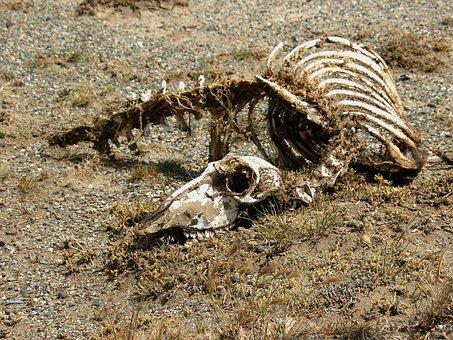 Carcass, Skeleton, Animal, Desert, Nimal