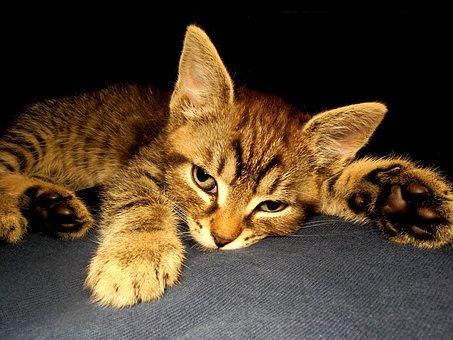 veľký zadok sexy mačička