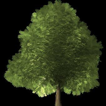 en portfolio page gauguin blue trees