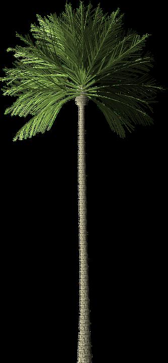 Palm Tree 183 Free Image On Pixabay