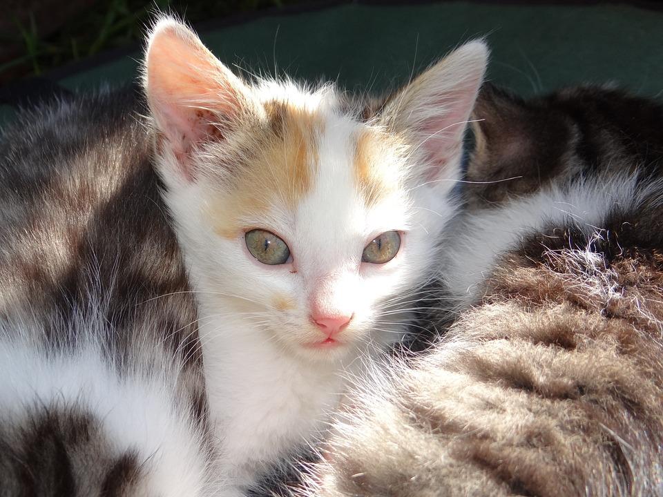 800 Free Cat Baby Cat Images Pixabay