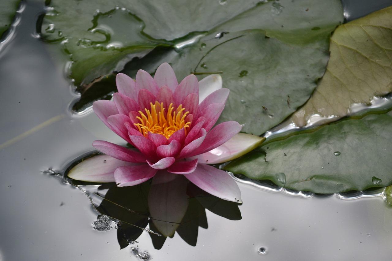 Цветы под водой фото