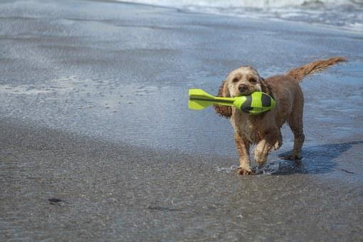 Dog On Beach, Play, Fun, Joy, Movement