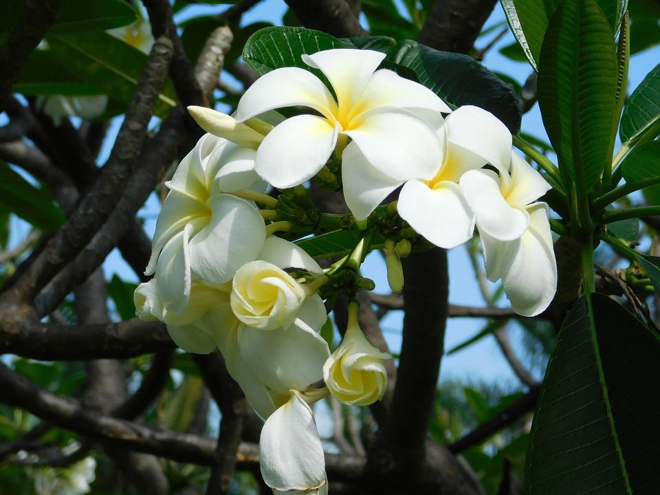 Fleur Mai Printemps Photo Gratuite Sur Pixabay