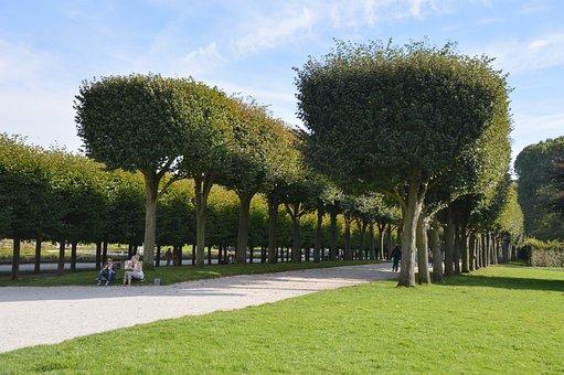 Park, Avenue, Trees, Plant, Castle Park