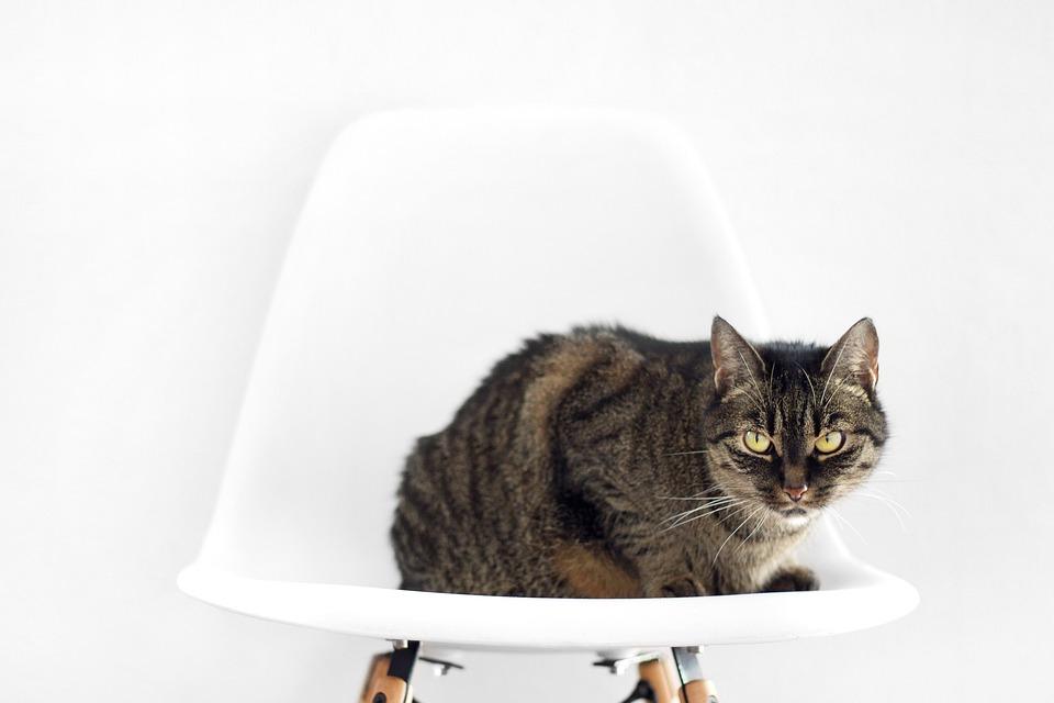 Sitzen Stuhl Foto Kostenloses Auf Katze Pixabay 6gb7Yfy