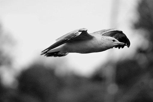 zadarmo obrázky vtáky